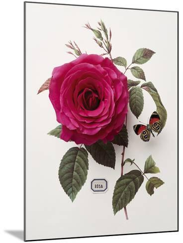 Floral Decoupage - Rosa-Camille Soulayrol-Mounted Giclee Print