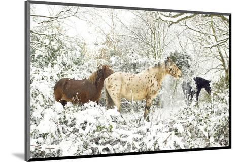3 Horses & Snow Covered Trees--Mounted Art Print