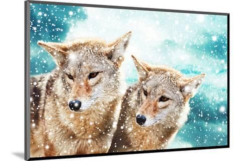 Coyote Pair & Blue Winter Sky--Mounted Art Print