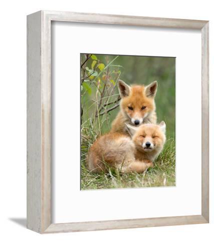 Pair of Cuddling Red Fox Cubs--Framed Art Print