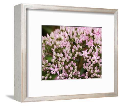 Starflowers--Framed Art Print