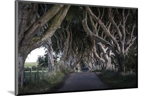 Dark Hedges Northern Ireland--Mounted Art Print