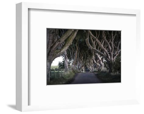 Dark Hedges Northern Ireland--Framed Art Print