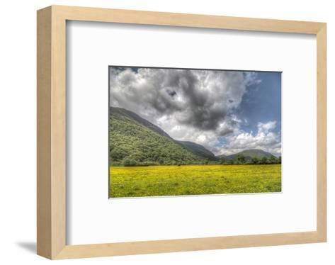 Sea of Buttercups--Framed Art Print