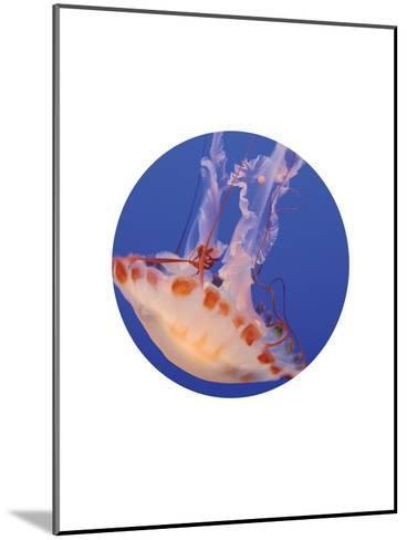 Jelly 3 Circle-Jetty Printables-Mounted Art Print