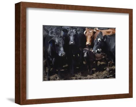 Bovine Selfie-Barry Hart-Framed Art Print