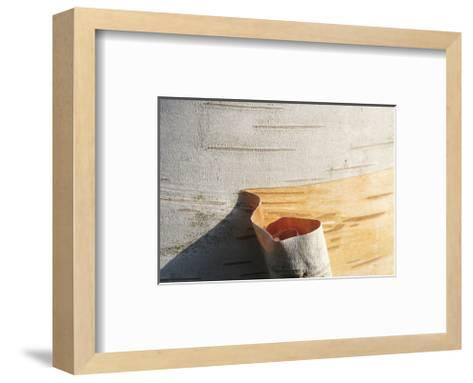 Birch Peel-Stephen Gassman-Framed Art Print