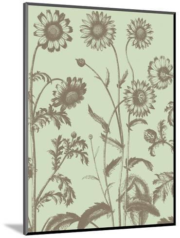 Chrysanthemum 11-Botanical Series-Mounted Art Print