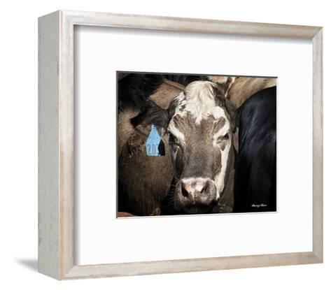 Cow #1-Barry Hart-Framed Art Print