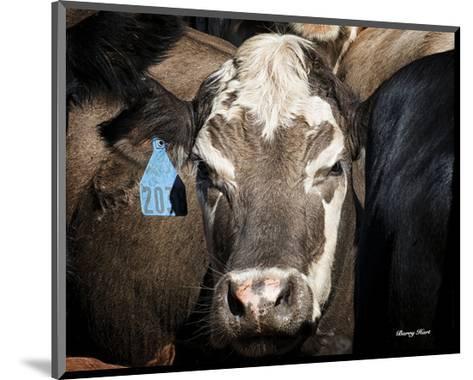 Cow #1-Barry Hart-Mounted Art Print