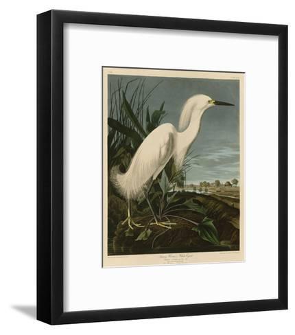 Snowy Heron or White Egret-John James Audubon-Framed Art Print