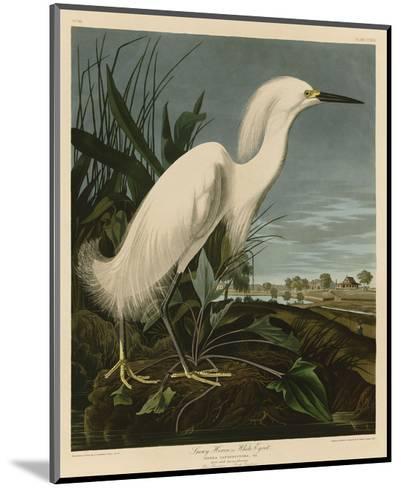 Snowy Heron or White Egret-John James Audubon-Mounted Art Print