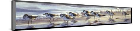 Shoreline Sanderlings-Matthew Hillier-Mounted Art Print