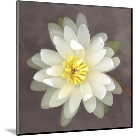 Water Lily-Erin Clark-Mounted Art Print