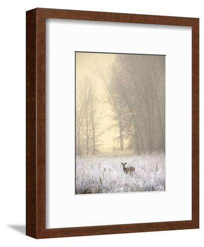White-tailed Deer in Fog-Jason Savage-Framed Art Print