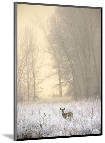 White-tailed Deer in Fog-Jason Savage-Mounted Art Print