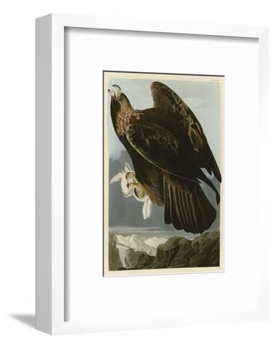 Golden Eagle-John James Audubon-Framed Art Print