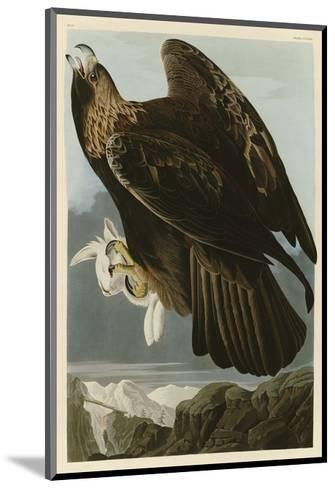 Golden Eagle-John James Audubon-Mounted Art Print
