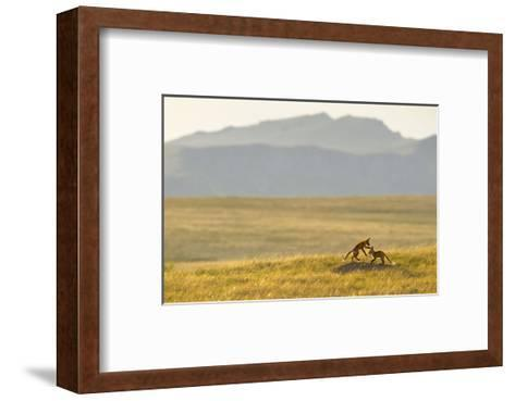 Montana Fox Kits-Jason Savage-Framed Art Print