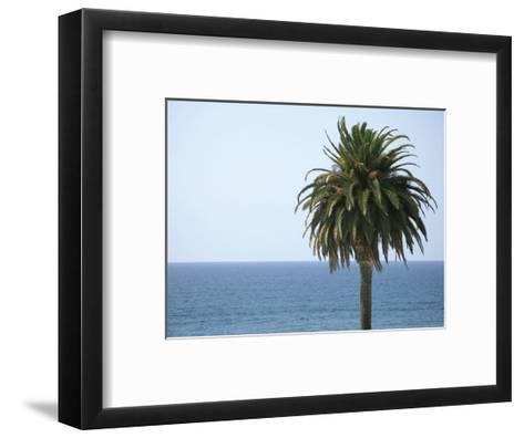 Palm at Moonlight Beach-Jenny Kraft-Framed Art Print