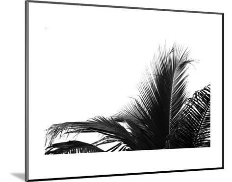 Palms 2-Jamie Kingham-Mounted Art Print