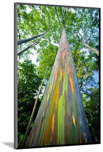 Painted Eucalyptus-Dennis Frates-Mounted Art Print