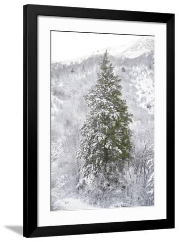 Snow Conifer-Chris Dunker-Framed Art Print