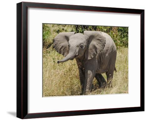 Elephant Calf Trumpet Full Bleed-Martin Fowkes-Framed Art Print