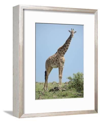 Giraffe against the Blue Sky-Martin Fowkes-Framed Art Print