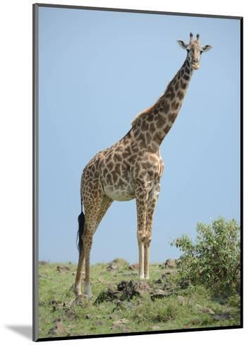 Giraffe against the Blue Sky-Martin Fowkes-Mounted Giclee Print