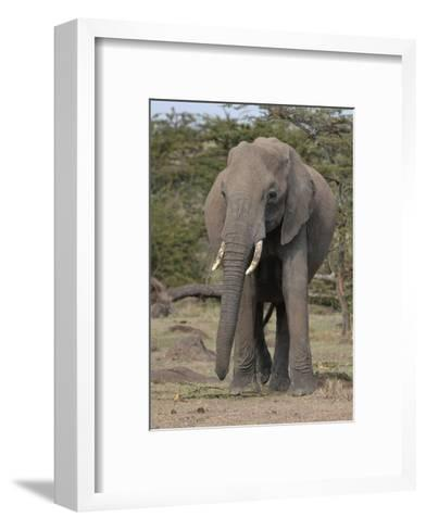 Portrait of an Elephant-Martin Fowkes-Framed Art Print