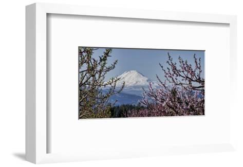 Schwartz - Mt. Adams in Spring-Don Schwartz-Framed Art Print