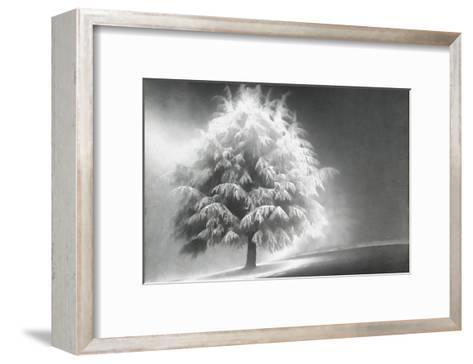 Schwartz - Enlightened Tree-Don Schwartz-Framed Art Print