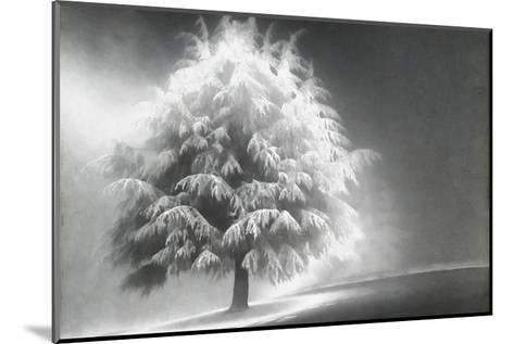 Schwartz - Enlightened Tree-Don Schwartz-Mounted Art Print