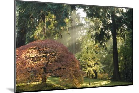 Schwartz - Bathed in Morning Light-Don Schwartz-Mounted Premium Giclee Print