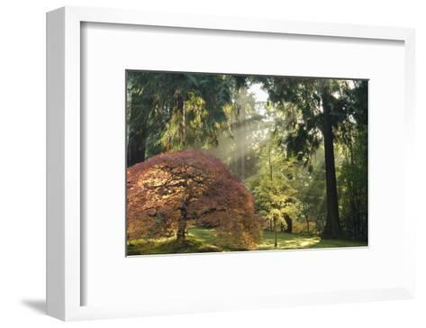 Schwartz - Bathed in Morning Light-Don Schwartz-Framed Art Print