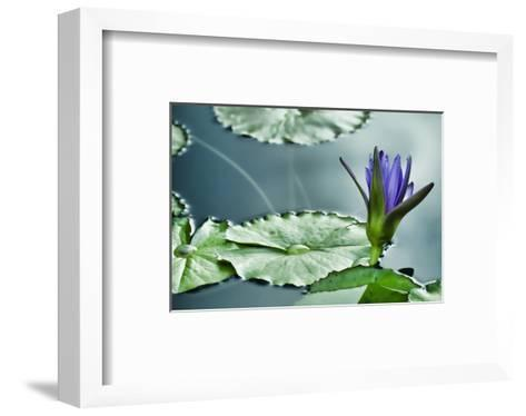 Schwartz - Lily on the Lake-Don Schwartz-Framed Art Print
