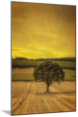 Schwartz - Lone Tree at Sunset-Don Schwartz-Mounted Premium Giclee Print