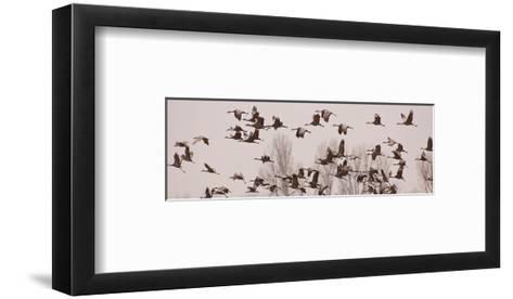 Schwartz - Cranes Across the Sky-Don Schwartz-Framed Art Print