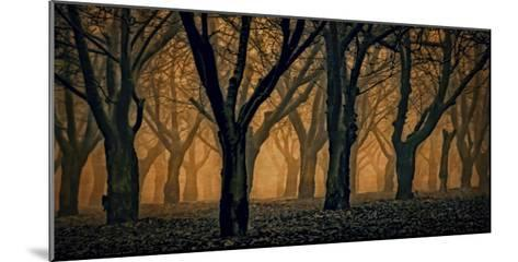 Schwartz - Woods Aglow-Don Schwartz-Mounted Art Print
