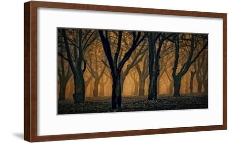 Schwartz - Woods Aglow-Don Schwartz-Framed Art Print