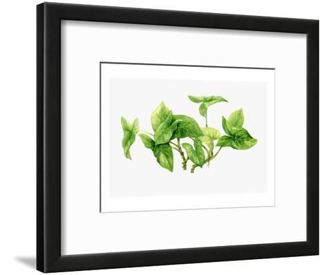 Watercolor Liana Branches--Framed Art Print