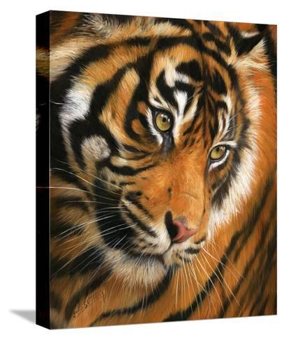 Tiger Face Portrait-David Stribbling-Stretched Canvas Print