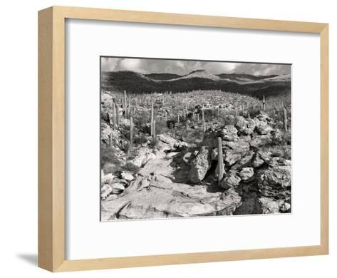 Morning Desert Vista B+W-Murray Bolesta-Framed Art Print