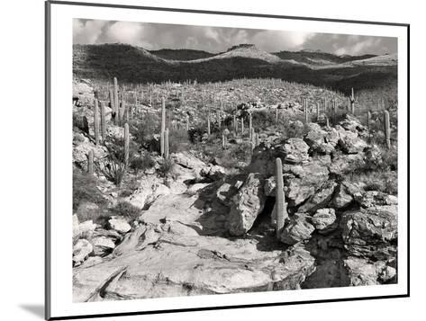 Morning Desert Vista B+W-Murray Bolesta-Mounted Art Print