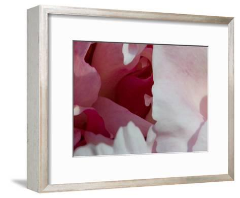 Peony Diptych-Rose Anne Colavito-Framed Art Print