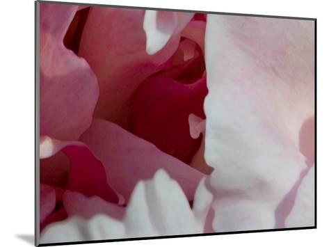Peony Diptych-Rose Anne Colavito-Mounted Art Print