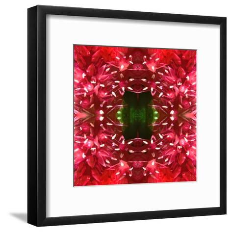 Celosia-Rose Anne Colavito-Framed Art Print