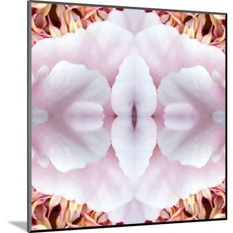 Pink Peony-Rose Anne Colavito-Mounted Art Print