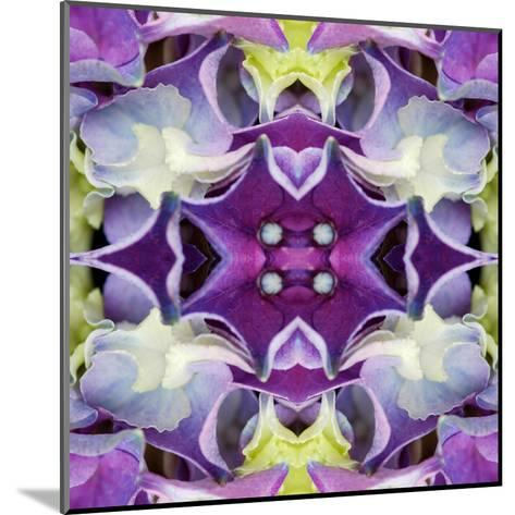 Hydrangea-Rose Anne Colavito-Mounted Art Print